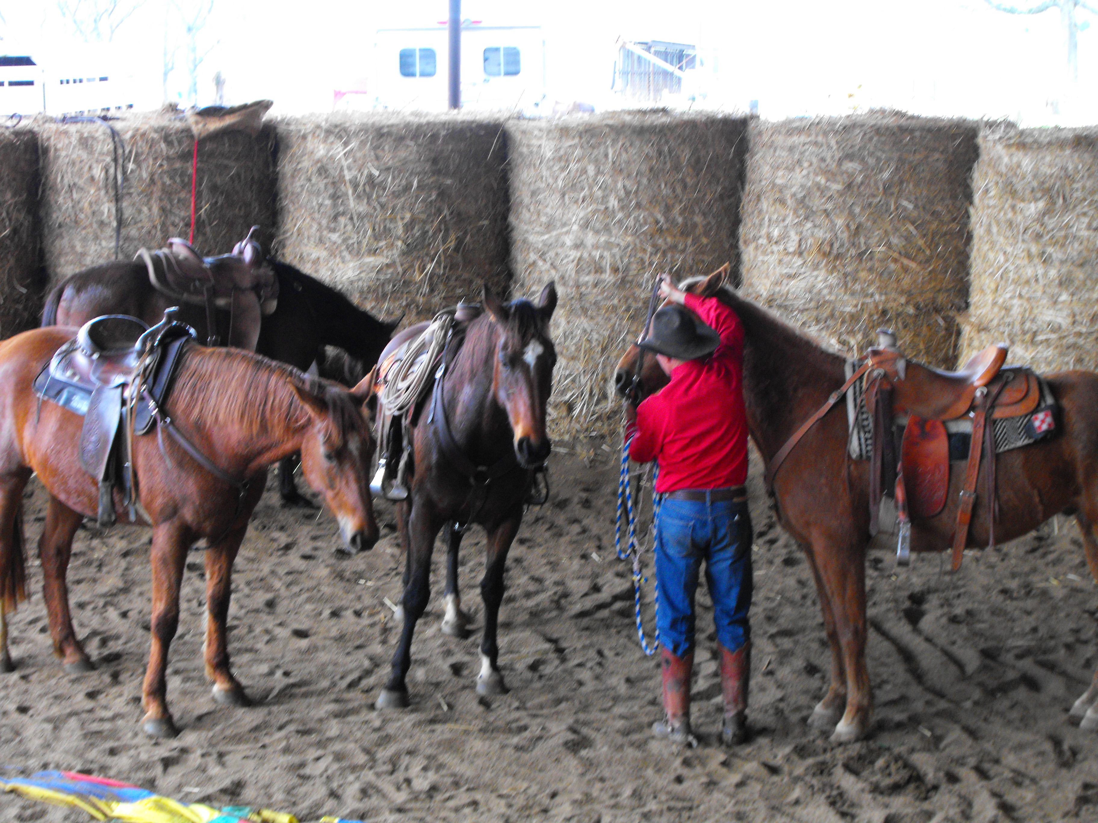 5 Telltale Signs of a Master Horsemanship Clinician or Trainer