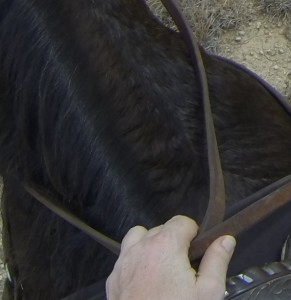 http://www.clinichorsemanship.com/one-handed-riding/