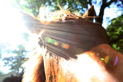 The Surprising Exercise that can Increase Communication with your Horse