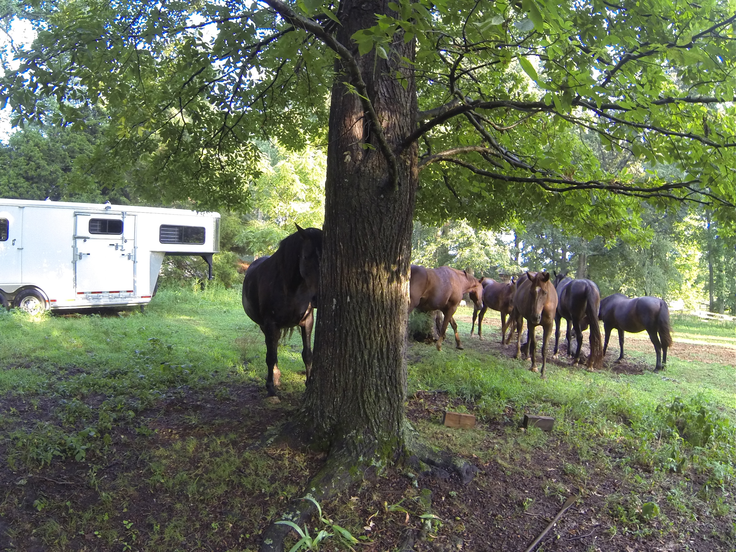 CH002: Buster McLaury on Reading the Horse & Trailer Loading
