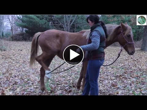Exercises to do with a Young Horse part 1
