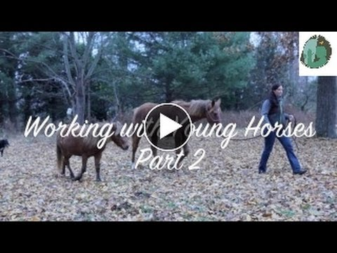 Exercises to do with a Young Horse Part 2
